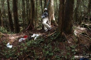 Aokigahara: A good place to hang around